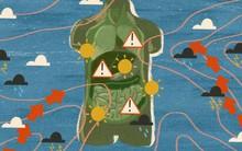 Biến đổi khí hậu đang gây tổn hại cho sức khỏe của chúng ta như thế nào?