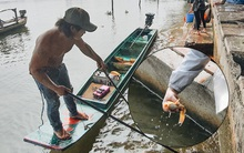 Ảnh: Chi 20 triệu mua cá chép rồi đi thuyền ra giữa sông để phóng sinh, người phụ nữ Sài Gòn vẫn choáng đặc khi thấy gã thanh niên lao theo chích điện để vớt cá