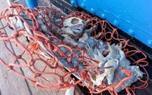 100 tấn rác cùng phát hiện đau lòng trong đợt thu dọn đại dương lớn nhất lịch sử: Con người đã đối xử quá tàn nhẫn với Trái đất rồi