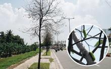 Đàn sâu to bằng ngón tay bò lúc nhúc, ăn trụi lá hàng loạt cây xanh trên đường nội đô đẹp nhất Sài Gòn