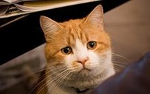 Giải đáp tất-tần-tật thắc mắc của teen về chăm sóc thú cưng (2)