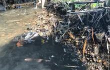 Cận cảnh nhiều mảng bám giống dầu nhớt quyện trong dòng nước dẫn vào nhà máy nước sông Đà