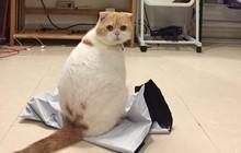 """Lộ diện boss mèo - """"kẻ gián tiếp"""" gây nên scandal """"gái xinh hỏi mua mèo"""" hot nhất Facebook giữa lúc nước sôi lửa bỏng"""