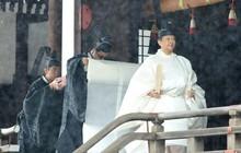 Nhật Hoàng và Hoàng hậu mặc trang phục trắng chuẩn bị bái tổ tiên trước lễ đăng cơ trong ngày mưa như trút