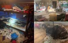 Cặp vợ chồng để 3 con nhỏ sống trong căn nhà ngập ngụa rác và chất thải của 245 con vật, đến cảnh sát cũng phải ngán ngẩm