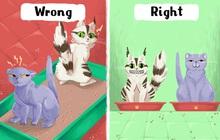 8 sai lầm cực kỳ nghiêm trọng rất nhiều người nuôi thú cưng đang mắc phải mà không hề hay biết
