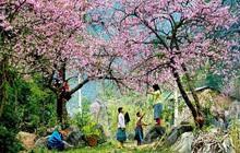 Hà Giang vào mùa hoa tam giác mạch đẹp rực rỡ, chị em còn chờ gì mà chưa đi ngay?