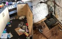 Khách thuê bỏ trốn để lại cho ông chủ số tiền nợ lên đến 900 triệu và một căn nhà ngập trong rác thải, nấm mốc