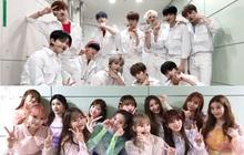 """Lùm xùm """"Produce"""" gian lận: Mnet huỷ sự kiện trong nước của X1 nhưng vẫn phát hành album cho IZ*ONE?"""