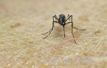 Lần đầu tiên phát hiện các trường hợp nhiễm virus Zika do muỗi đốt ngay tại châu Âu