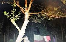 Cô gái 23 tuổi tử vong trong tư thế treo cổ trên cây ổi