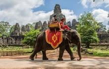 Sau làn sóng phẫn nộ từ dư luận, chính phủ Campuchia chính thức cấm cưỡi voi ở Angkor Wat