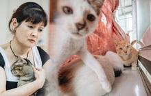 """Nhà Mèo và câu chuyện cô chủ nhặt nuôi hàng trăm chú mèo bệnh tật về chăm sóc: """"Nếu sống, con sẽ được ở lại đây mãi mãi"""""""