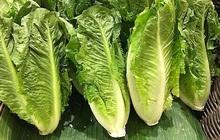 Ăn salad và rau sống, hàng trăm người bị nhiễm khuẩn E. coli