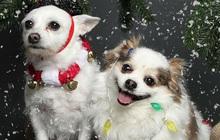 Trưng ra vẻ mặt cam chịu khi bị sen bắt chụp hình mừng Giáng sinh, 2 boss trở thành ngôi sao được săn đón trên MXH