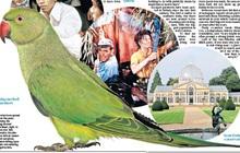 Hàng ngàn con vẹt xanh tự nhiên đổ bộ hàng loạt vào Anh Quốc - bí ẩn suốt hơn 60 năm làm khoa học đau đầu cuối cùng đã có lời giải