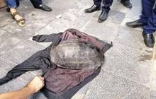 Hà Nội: Người đàn ông bắt được con rùa nặng hơn 10kg dưới hồ Gươm