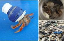 Thảm họa sinh thái: Nửa triệu sinh vật đã phải bỏ xác tại hòn đảo đang ngập trong hàng trăm triệu mảnh rác nhựa