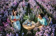 """Được mệnh danh là """"bản sao"""" của Đà Lạt nhưng nông trại hoa ở Chiang Mai lại khiến mọi người trầm trồ vì """"xịn"""" hơn rất nhiều"""