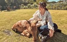 Khám phá xứ sở Bambi ở Đài Loan, nơi mà tất tần tật mọi thứ đều liên quan đến những chú hươu sao cực đáng yêu