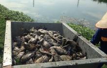Nguyên nhân dẫn đến việc cá chết hàng loạt tại công viên Yên Sở