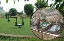 """Rắn bủa vây một chung cư ở Hà Nội, khu vui chơi bị """"bỏ hoang"""" vì người dân sợ rắn tấn công"""