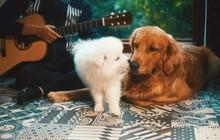 Mặc chủ đàn hát chó cưng bên cạnh cứ ngủ an yên, chàng trai hát cover thân thế bí ẩn này đang làm dân tình sôi sục tìm info!