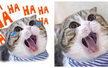 """Nguồn gốc bộ sticker mèo đang làm Facebook chao đảo: Cả dòng họ """"boss"""" thần thái đỉnh cao như mẫu lookbook!"""