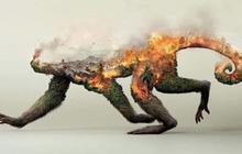 Sự thật về loạt hình thú rừng chết cháy ở Amazon gây ám ảnh: Hỏa hoạn và những cái chết là thật, nhưng không liên quan đến nhau!