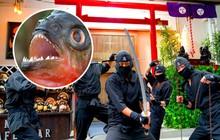 """Nhật Bản có món mì ramen nghe là sợ """"ướt quần"""": nấu bằng cá ăn thịt người piranha"""