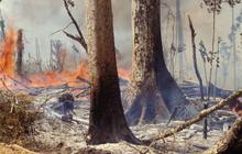 8 tháng 100.000 vụ cháy, thành phố cách 3.200km tối đen giữa ban ngày: Những con số cho thấy cháy rừng tại Amazon đang trầm trọng đến mức nào