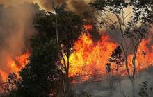 Thảm họa Amazon không còn là chuyện ở xa: Dân mạng thế giới và Việt Nam đồng loạt lên tiếng kêu gọi cứu lấy cánh rừng xanh