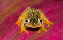 """Madagascar - """"Thiên đường"""" của những loài động vật kỳ lạ"""