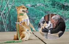 """Giả thuyết về pha bẻ lái cực gắt của """"Cậu Vàng"""" shiba: """"Boss"""" của lão Hạc là chú chó Hachiko huyền thoại năm nào?"""