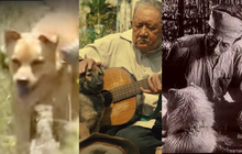 """4 em chó ta trên màn ảnh Việt: Nhìn cưng mà diễn tự nhiên, nào có kém cạnh chú """"Shiba Inu"""" đóng Cậu Vàng?"""