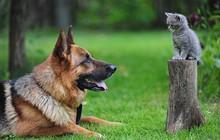 """Những bức ảnh chứng minh chó mèo không """"ghét nhau"""" như chúng ta tưởng"""