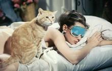 Ngạc nhiên chưa: Lười ra khỏi giường buổi sáng chính là dấu hiệu của một người thông minh vượt trội