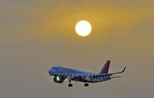 Bị ong tấn công, máy bay Air India hoãn chuyến trong nhiều giờ