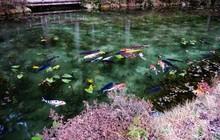 Hồ Nhật Bản đẹp như tranh sơn dầu của Monet: 20 năm trước vô danh, không ai biết đến, giờ thành địa điểm hút khách bậc nhất xứ hoa anh đào