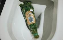 Hội ghét ăn hành Việt Nam tìm thấy tri kỉ tâm giao: Hiệp hội căm thù rau mùi quốc tế, quy tụ hơn trăm nghìn thành viên khắp toàn cầu