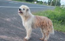 Chú chó đi lạc kiên trì đứng đợi chủ suốt 4 năm trời và hành động gây bất ngờ khi gặp lại người chủ cũ