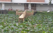 Xây hẳn cầu tre bắc ra giữa hồ sen cho sinh viên sống ảo, trường đại học nhận được bão like nhưng phản ứng của cộng đồng mạng mới bất ngờ