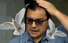 """Đang phàn nàn về chim phóng uế, vị quan chức liền bị bồ câu """"bĩnh"""" vào đầu"""