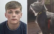 """Mèo """"nhà người ta"""" biết cào vào mặt trộm để tố cáo hắn với cảnh sát, mèo nhà bạn đã làm được gì?"""