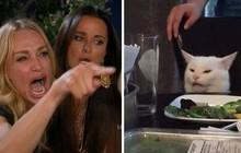 """Chỉ vì một phút """"cà khịa"""", chú mèo nhát gừng bất chợt hoá sao Instagram với hơn 700K follow"""