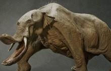 """Có thể bạn chưa biết, tổ tiên của voi và tê giác cổ đại có vẻ ngoài """"quái dị"""" hơn ngày nay nhiều!"""