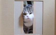 """YouTuber bày trò """"lách khe cửa hẹp"""" cho 2 boss, kiểm chứng xem mèo có làm từ... chất lỏng hay không"""