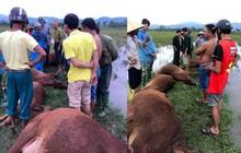 Hà Tĩnh: Bị sét đánh, 1 người nguy kịch, 6 con bò bị chết