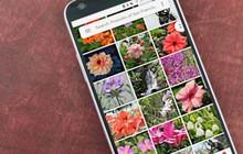 Cuộc vui chóng tàn: Người dùng iPhone sắp không được lưu ảnh gốc miễn phí lên Google Photos nữa