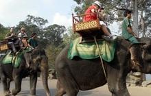 Hình ảnh cưỡi voi ở Angkor Wat sẽ đi vào dĩ vãng